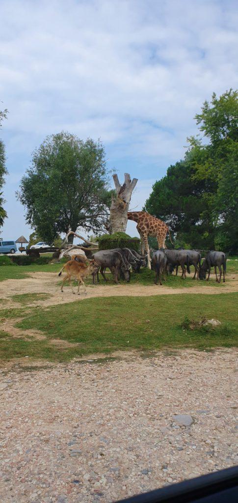Afrykańskie zwierzęta w zoo.
