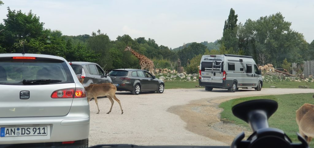 Samochody jadące rzez safari.