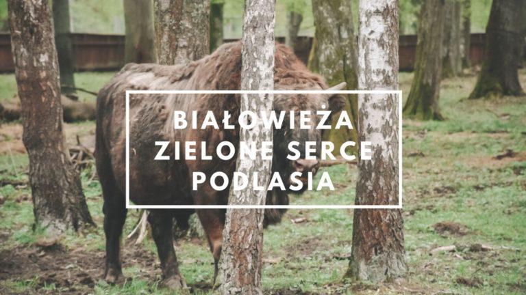 Białowieża  – zielone serce Podlasia