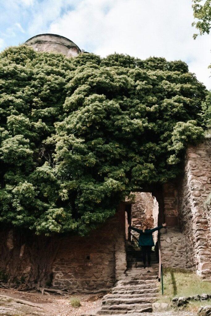 Dziewczyna w przejściu na Zamku Chojnik, mury porośnięte zielenią.