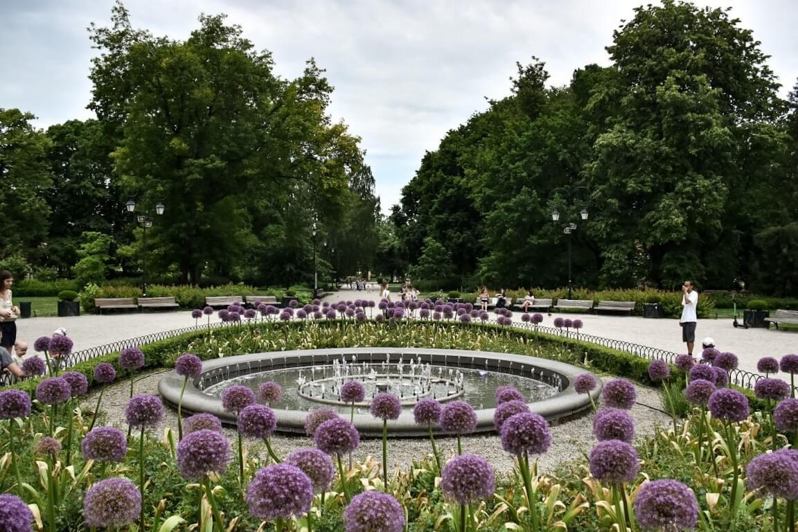 Fioletowe kwiaty rosnące dookoła fontanny w Ogrodach Bernardyńskich.