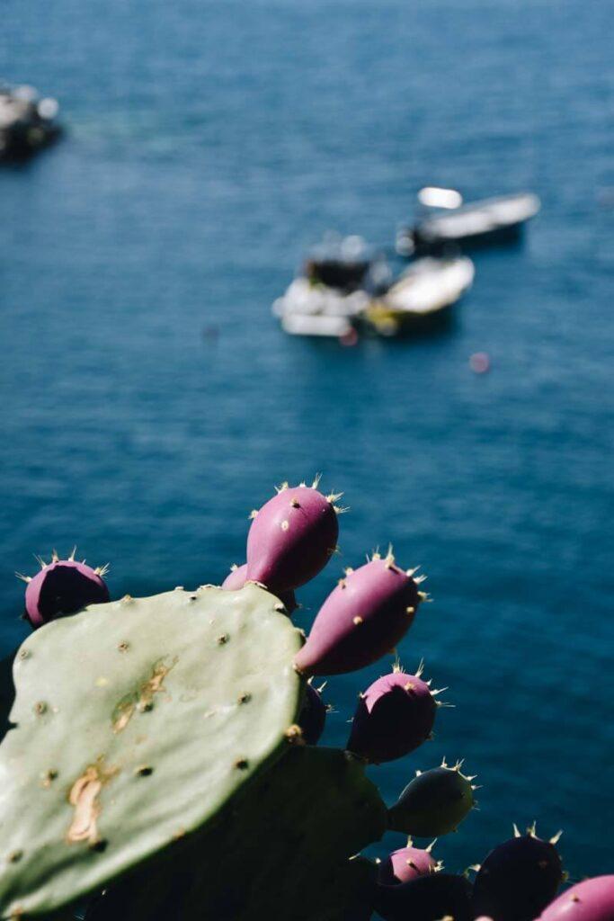 Ozdobna roślina na tle łódek bujających się na morzu.