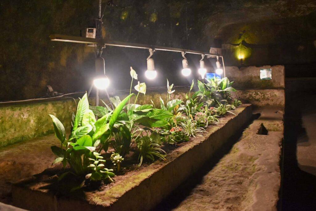 Plantacja roślin w podziemiach.